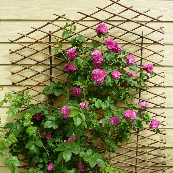 Λουλούδια στο μπαλκόνι20