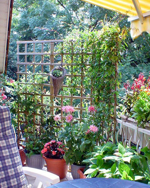 Λουλούδια στο μπαλκόνι21