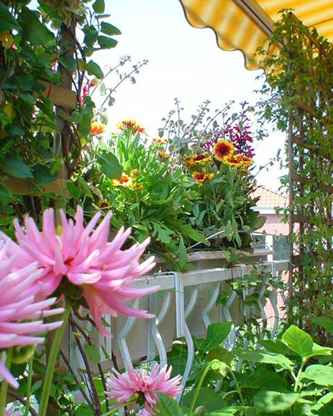 Λουλούδια στο μπαλκόνι22