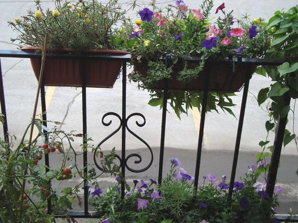 Λουλούδια στο μπαλκόνι39