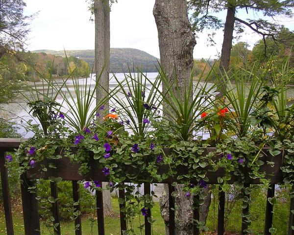 Λουλούδια στο μπαλκόνι40