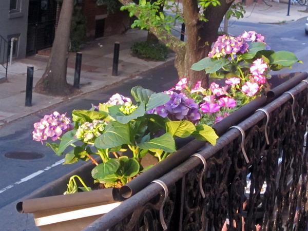 Λουλούδια στο μπαλκόνι43