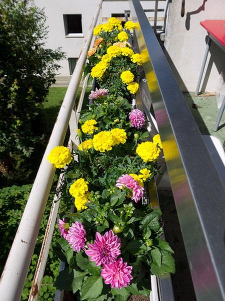 Λουλούδια στο μπαλκόνι45