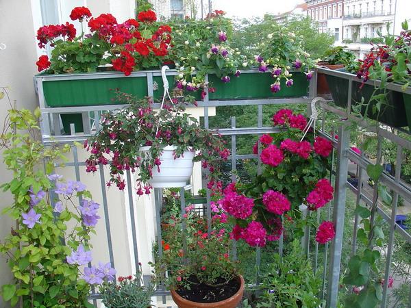 Λουλούδια στο μπαλκόνι46