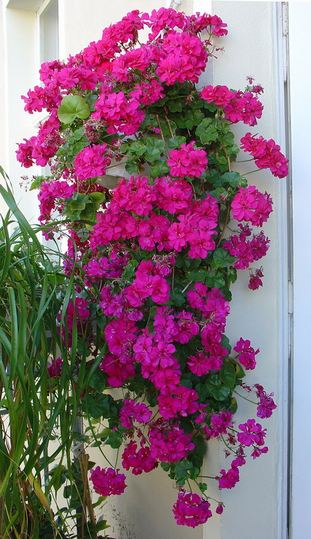 Λουλούδια στο μπαλκόνι47