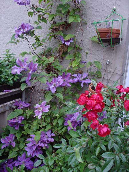 Λουλούδια στο μπαλκόνι51