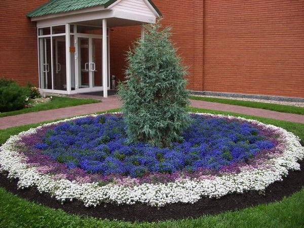 Λουλούδια μπροστά από το σπίτι14