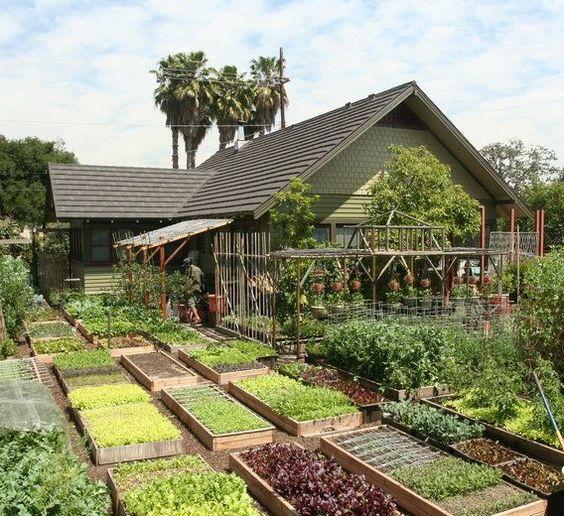 αστικός κήπος λαχανικών ιδέες13