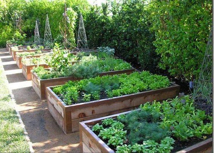 αστικός κήπος λαχανικών ιδέες19