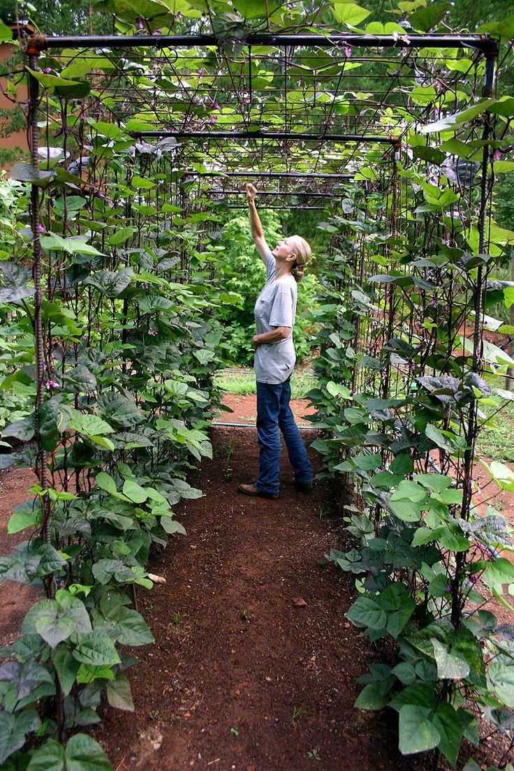 αστικός κήπος λαχανικών ιδέες9