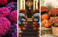 Οι πιο όμορφες ρυθμίσεις με θεαματικά λουλούδια του φθινοπώρου