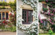 Οι 46 πιο όμορφες ιδέες με αναρριχώμενα φυτά για να ανανεώσετε τους εξωτερικούς σας χώρους