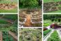 Κουκαμέλον (cucamelon) τα μίνι καρπουζάκια - πληροφορίες και ιδέες για τον κήπο και την γλάστρα σας