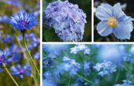 Τα ομορφότερα μπλε λουλούδια για ένα μαγικό κήπο