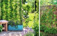 Πως να δημιουργήστε μια DIY ιδιωτική ζώνη στην αυλή ή τον κήπο σας