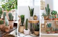 25 Μοναδικές ιδέες για να διακοσμήσετε τους εσωτερικούς σας χώρους με κάκτους