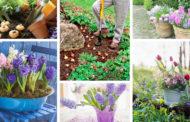 Φυτέψτε βολβούς την άνοιξη και δημιουργήστε τον πιο όμορφο και πετυχημένο κήπο